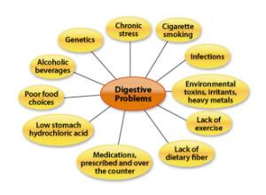 Digestive-Chart-Web-300x220